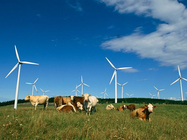 Image result for wind energy farm